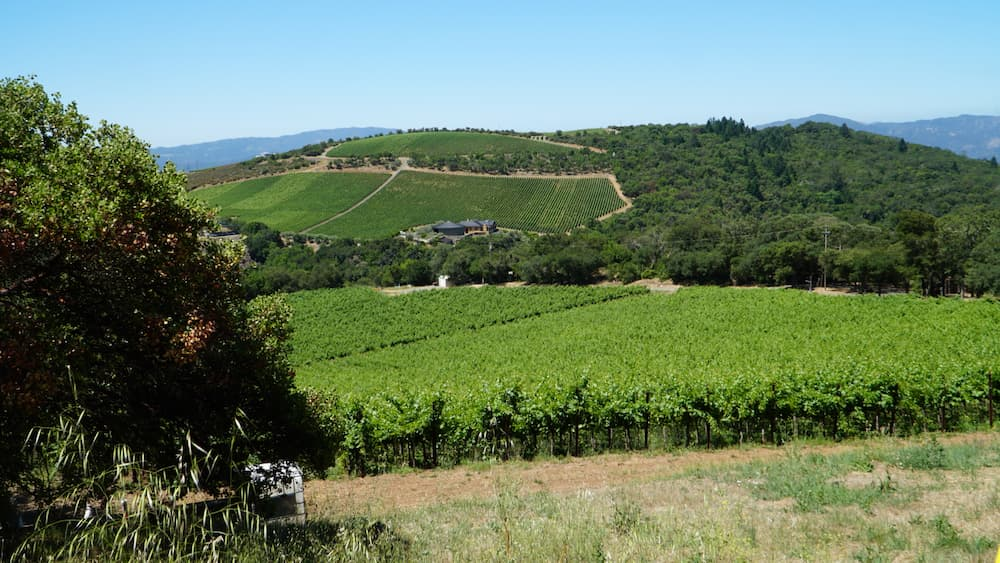 marketing, pr, SEO for wineries in Napa Valley